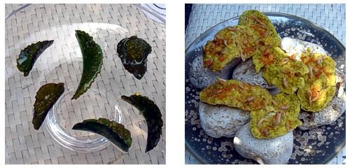 Kalanchoe con caviar de aceite  &  Tortilla de camarones